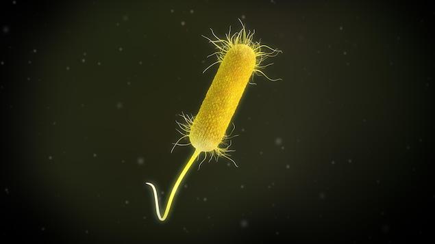 Illustration 3D d'une bactérie Pseudomonas aeruginosa.