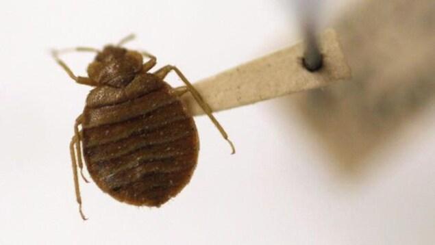 Un insecte soutenu par une pince