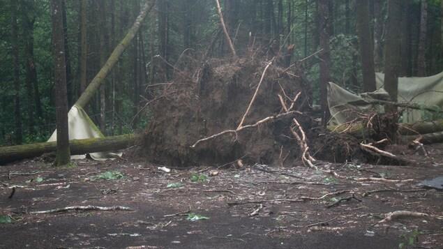 Plusieurs arbres se sont déracinés alors que plusieurs toiles sont endommagées et déchirées.