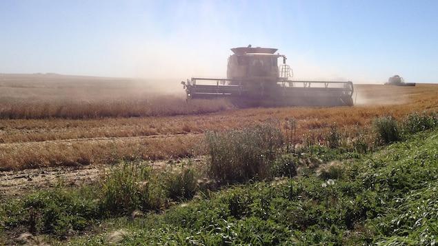 Une récolte en Saskatchewan.