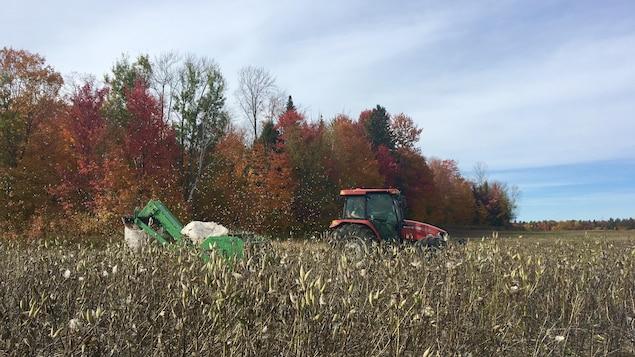 Tracteur tirant la récolteuse du soyer du Québec dans un champ de Saint-Tite, en Mauricie