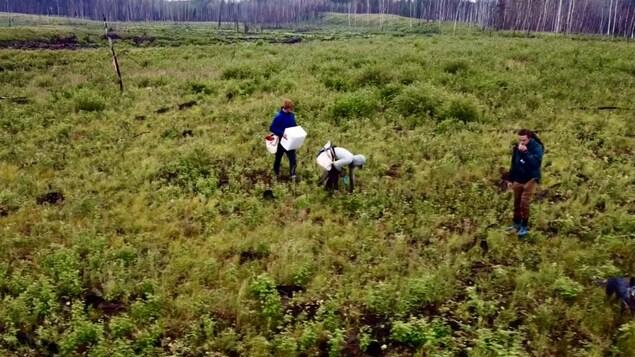 Antoine Moses qui plante des arbres en Alberta.
