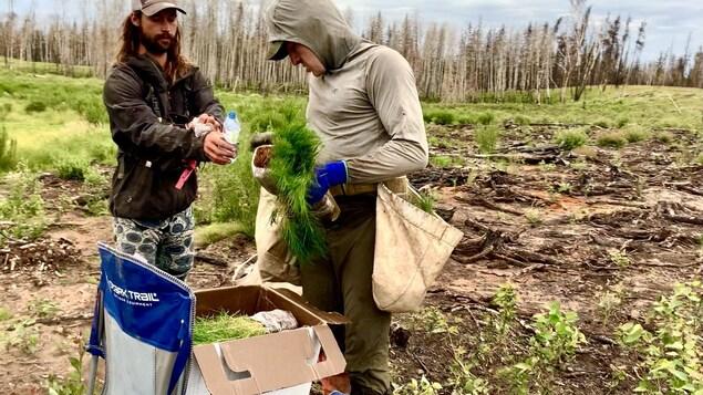 Antoine Moses plante des arbres en Alberta.