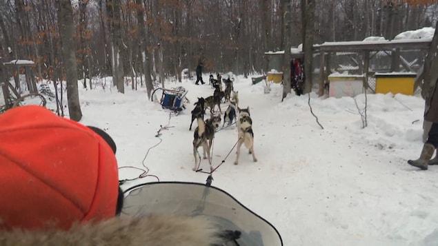 Remy Leduc et son attelage de chiens qui s'élance sur une piste.