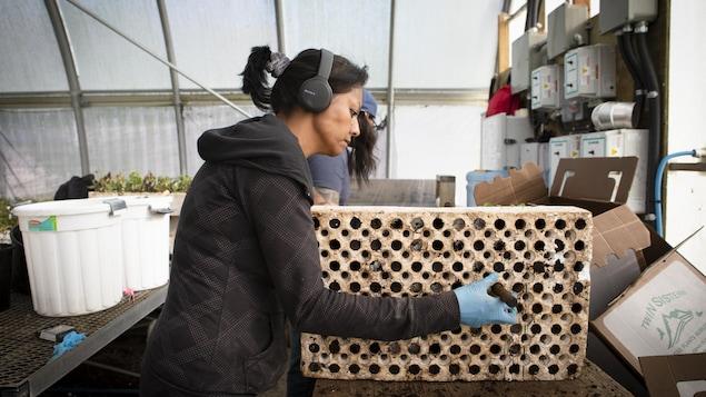 Une femme travaille sur des plantes indigènes de la Colombie-Britannique.