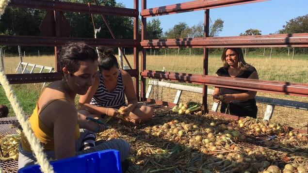 Jihane El Beqqal et Isabelle Fortier, en compagnie d'une autre participante, en pleine corvée d'oignons