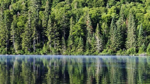 Une rivière ensoleillée, en bordure de la forêt.