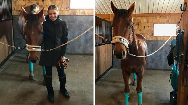 Le cheval dans son écurie avec Rosalie