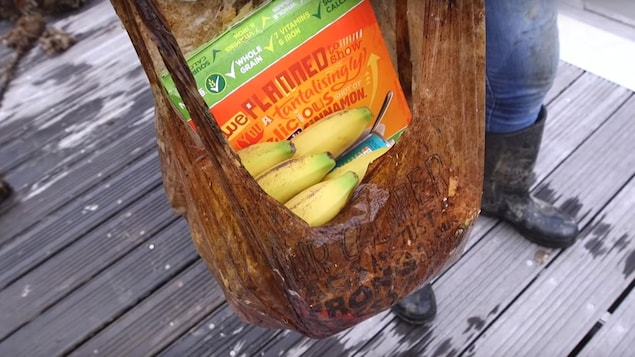 Un sac d'épicerie.