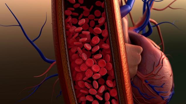 Illustration d'un vaisseau sanguin.