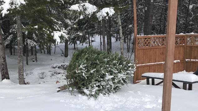 Un sapin dans un cour dans la neige.