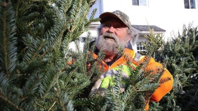 Un employé barbu observe un sapin de Noël dans une cours de vente de sapins.