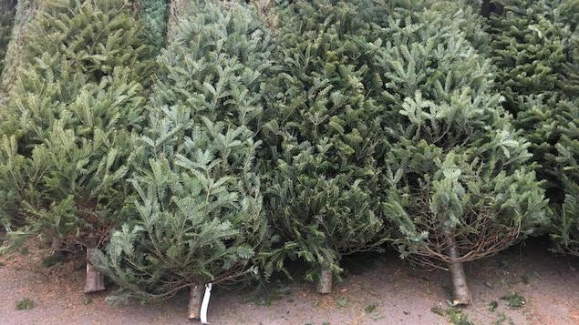Des sapins de Noël naturels couchés les uns contre les autres.