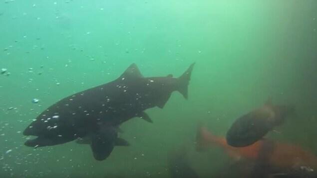 Des poissons qui nagent sous l'eau.