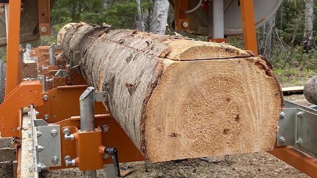 Un gros plan sur la partie supérieure d'un tronc d'arbre qui est partiellement coupé par la scierie mobile.