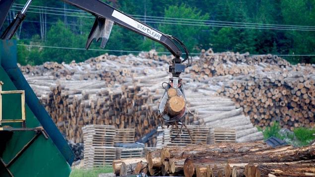 L'approvisionnement en cèdre de la scierie Waska au Nouveau-Brunswick vient à 65% de la forêt du Maine.