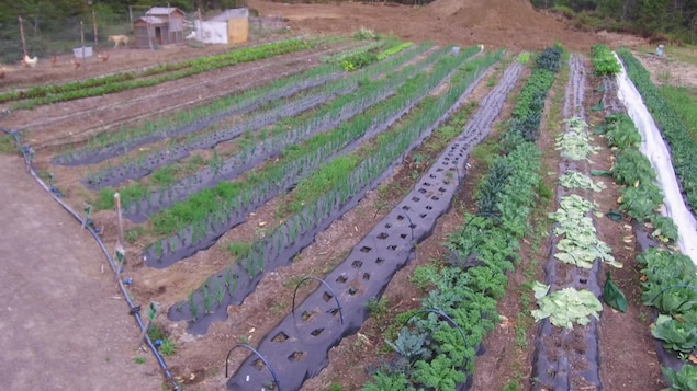 Jardin au 50e parallèle