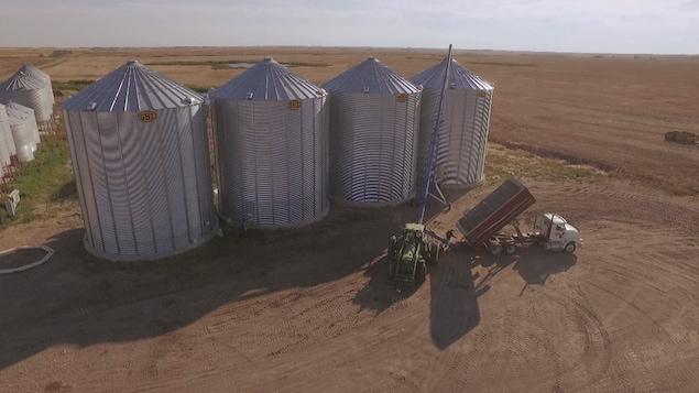 silos de légumineuses