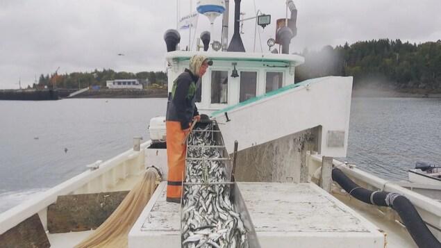 Bateau de pêche à la sardine au Nouveau-Brunswick.