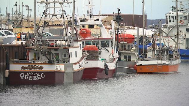 Plusieurs bateaux de pêche accostés à un quai.