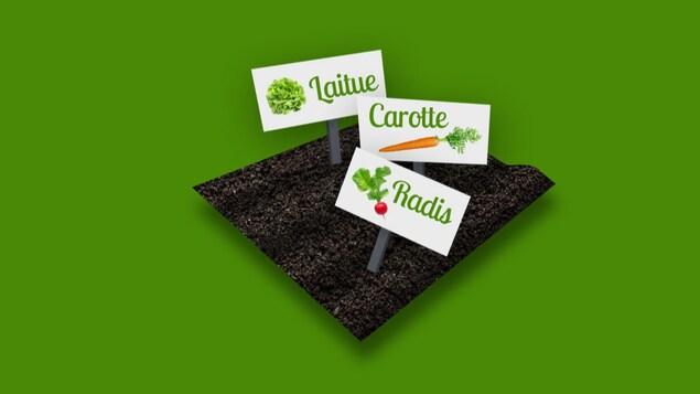 Image infographique d'un carré de potager avec des affiches de légumes.