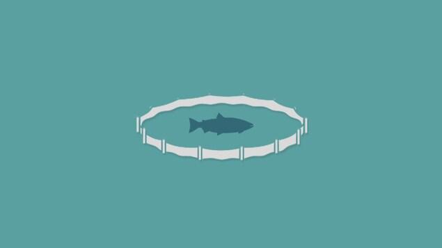 Image infographique d'un saumon dans un bassin d'élevage.