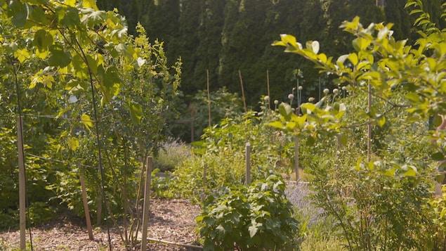 Des arbustes côtoient des fines herbes et de plus grands arbres dans un jardin communautaire.