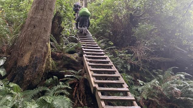 Deux personnes montent à une échelle en bois au milieu de la forêt.