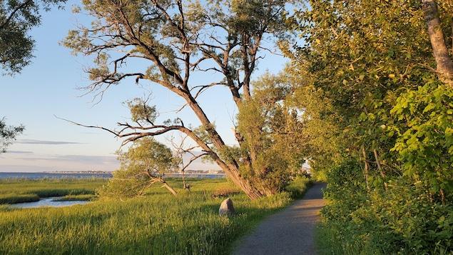 Le sentier du Littoral à Rimouski, au couchant.