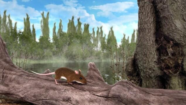Reconstitution artistique d'une souris Apodemus atavus dans une forêt.