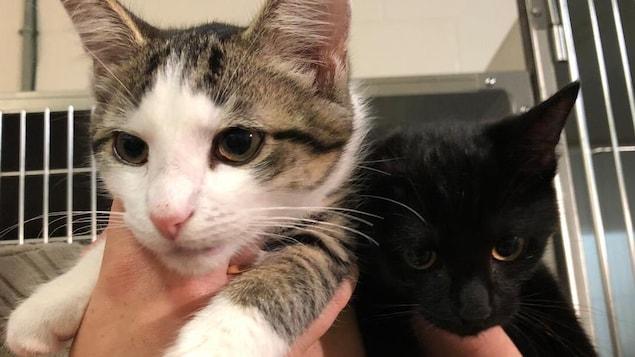 Deux chats sont tenus par un bénévole devant des cages.