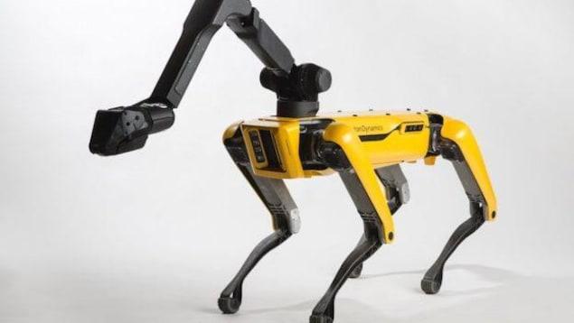 Un robot jaune et noir qui ressemble à un chien.
