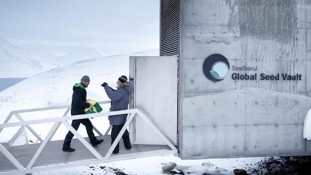 Des boîtes de semences sont transportées à l'intérieur  e la Réserve mondiale de semences du Svalbard.