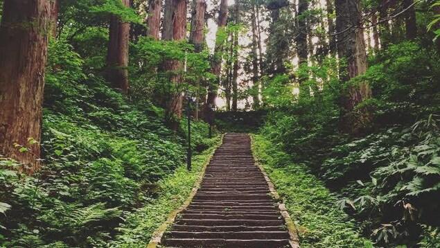 Un escalier de pierre entouré de végétation.