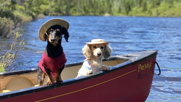 Deux teckels sur une barque.