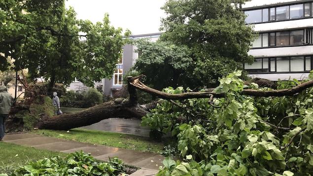 Un arbre déraciné gît sur la chaussée devant un immeuble.
