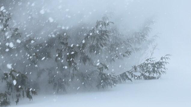 Des branches de sapin en campagne pendant une tempête de neige.