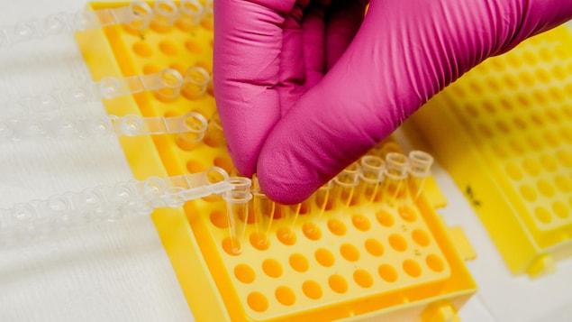 Plusieurs centaines de chercheurs à travers le monde ont récolté des échantillons d'ADN