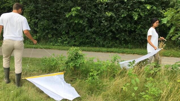Mamta Patel et Barret Foster inventorient régulièrement les tiques dans les parcs de London.