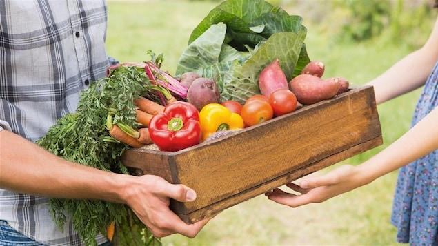 Créer un lien direct entre l'agriculteur et le client: c'est le grand projet réussi par Equiterre avec les paniers bio.