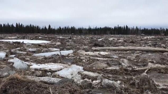Des morceaux de glace, de bois et des racines d'arbres flottant sur une rivière.