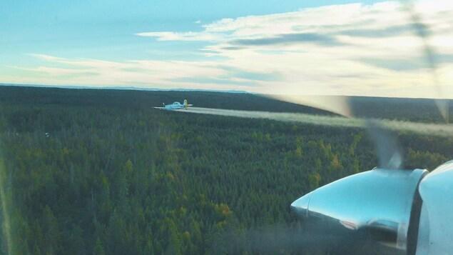 Un avion combat la tordeuse des bourgeons de l'épinette dans le nord du Nouveau-Brunswick.