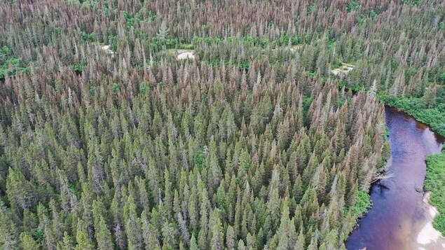 Image de drone d'une forêt dans le secteur du Valinouët.