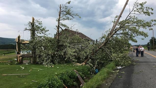 Des arbres cassés