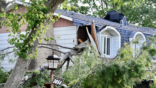 Une grosse branche d'arbre projetée par la tornade, enfoncée dans le coin d'une maison