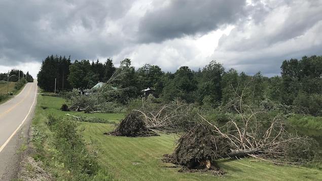 Des arbres déracinés par une tornade.