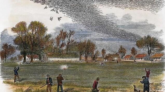 Une envolée d'oiseaux dans le ciel qui se font tirer par des chasseurs.