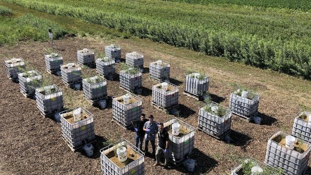 Des installations de traitement d'eaux usées dans un champ.