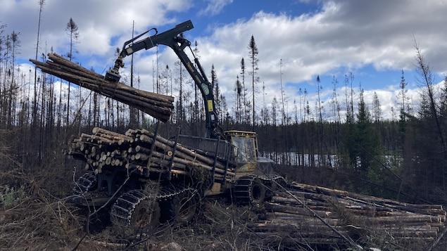 Un camion transporte du bois brûlé.