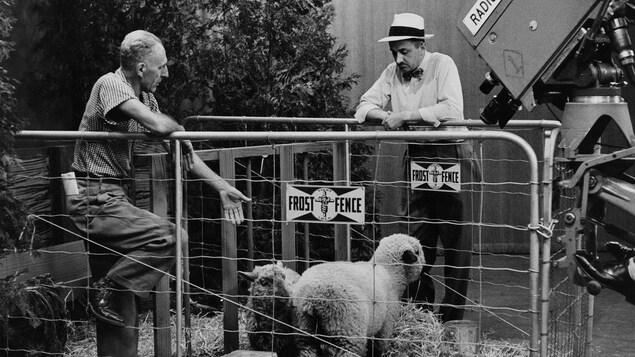 Dans un studio de télévision, l'agronome Georges Mayrand, debout à l'intérieur d'un enclos où broutent des moutons discute avec l'animateur Germain Lefebvre, debout, appuyé à la clôture à l'extérieur de l'enclos. À l'avant-plan, une caméra de télévision capte la scène.